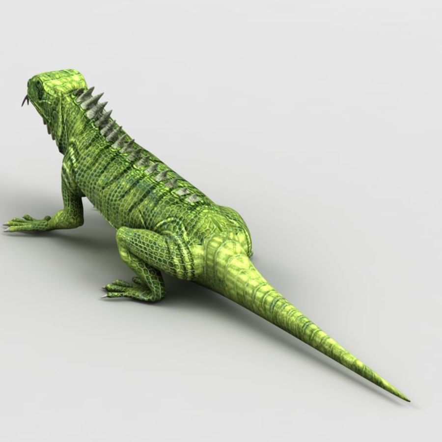 Iguana 2 royalty-free 3d model - Preview no. 5