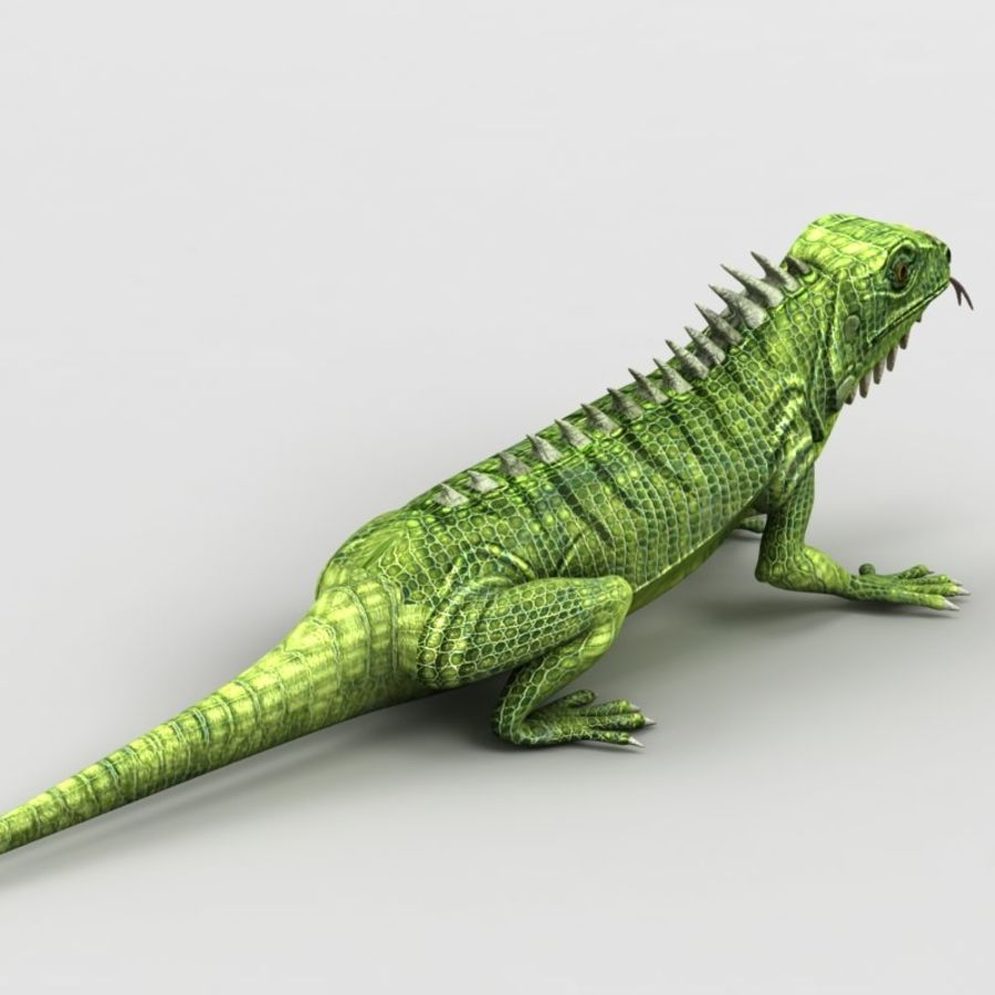 Iguana 2 royalty-free 3d model - Preview no. 4