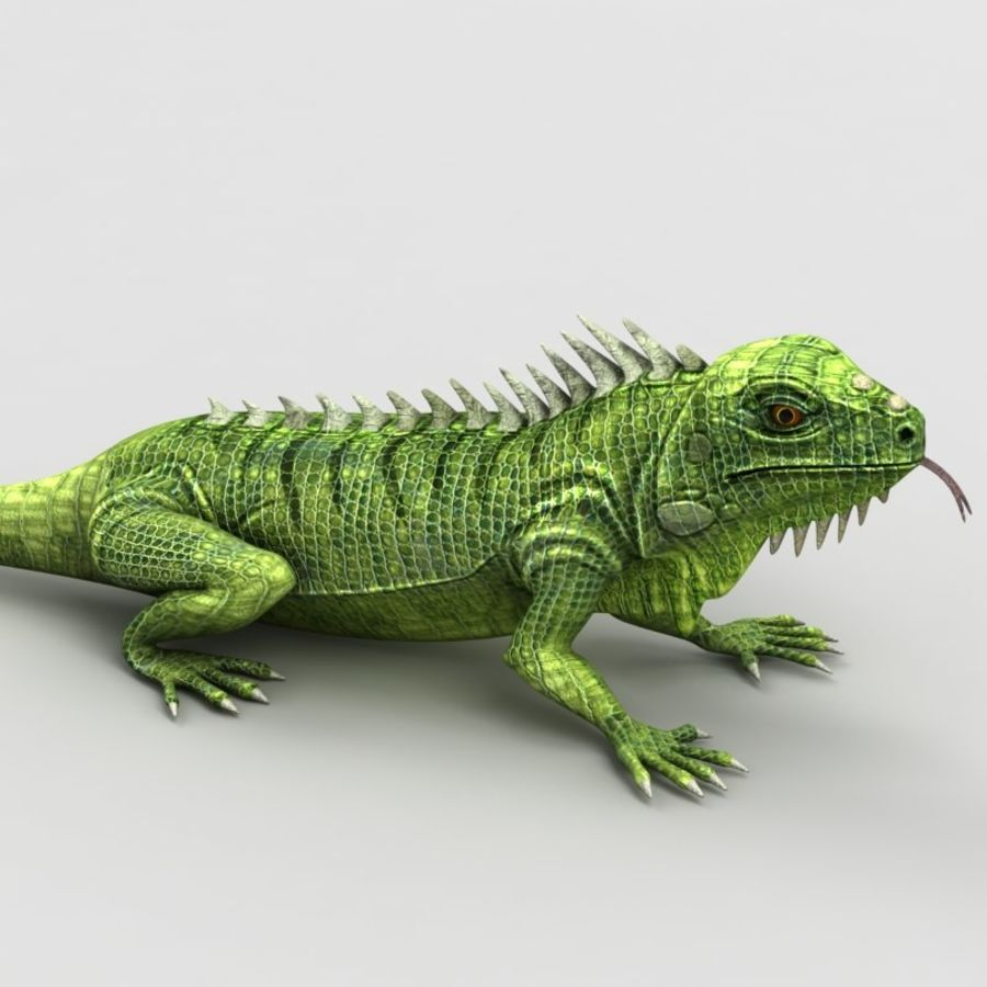 Iguana 2 royalty-free 3d model - Preview no. 3