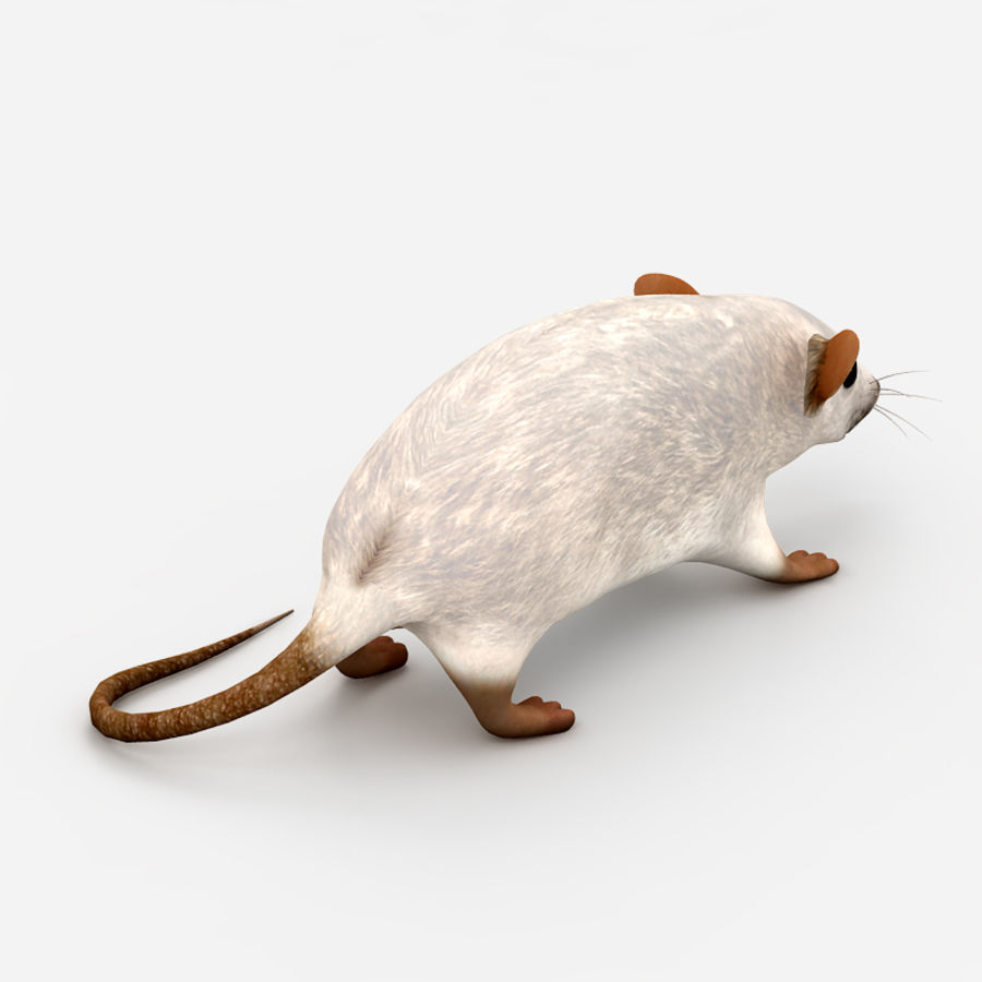 Rat Mouse 3 royalty-free 3d model - Preview no. 5