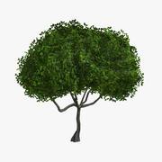 Tree (Small01) 3d model