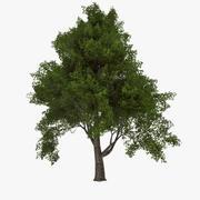 Liściasty 030 3d model