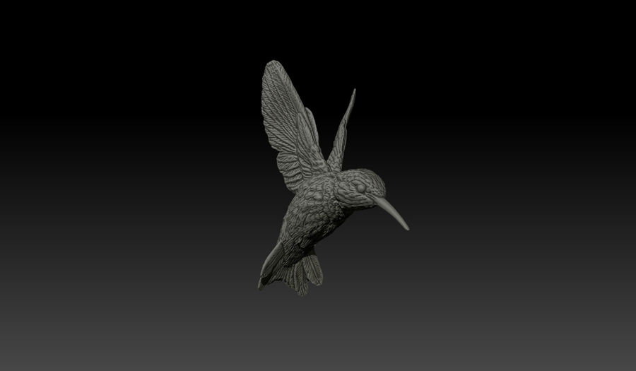 Colibri (Trochilidae) royalty-free 3d model - Preview no. 1