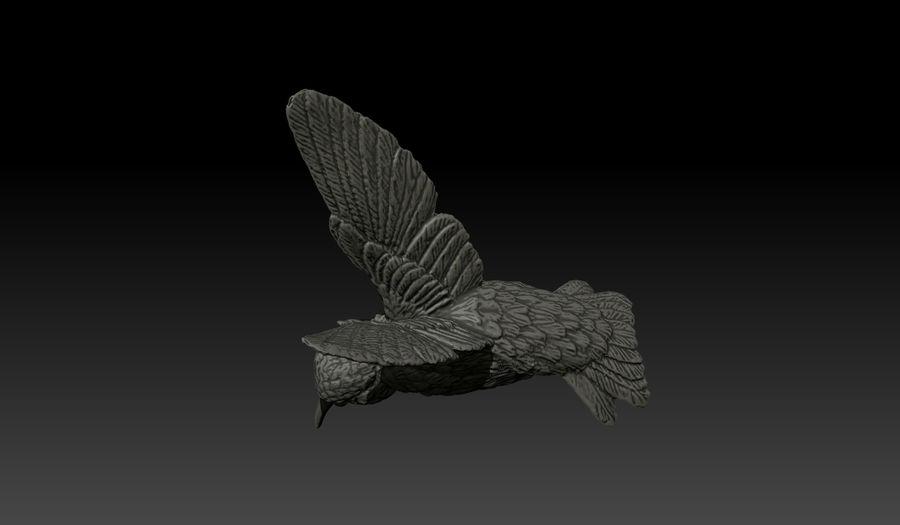 Colibri (Trochilidae) royalty-free 3d model - Preview no. 6