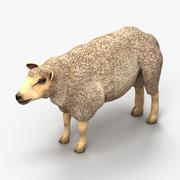 Owca jagnięca 2 3d model
