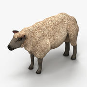 Owca jagnięca 3 3d model