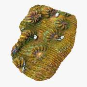 Kielich koralowy 02 3d model