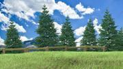 Pine Tree Forest - Summer 3d model