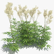 Meadowsweet Grass 3d model