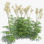 Meadowsweet Grass 3d model