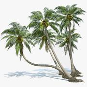 Coconut Palms Set 3d model