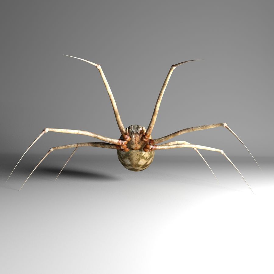 Spider royalty-free 3d model - Preview no. 6