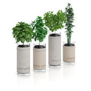 Four Herbs in Glass Pots 3d model
