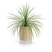 나무 냄비에 작은 식물 3d model