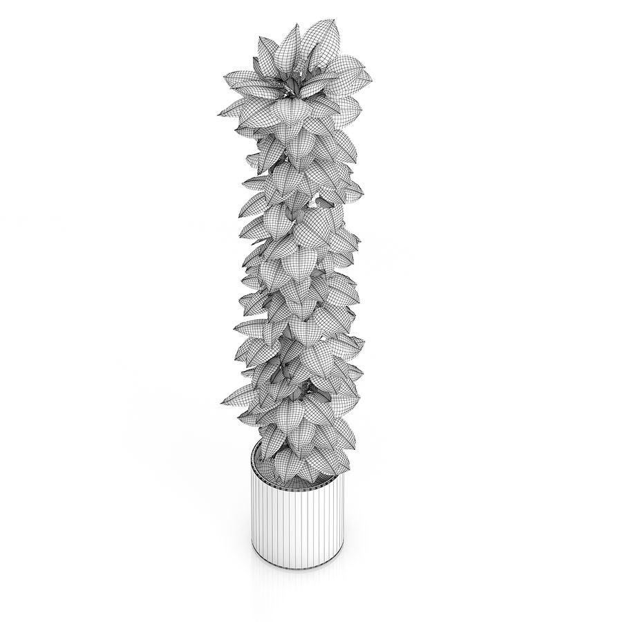 Hoge klimplant royalty-free 3d model - Preview no. 6