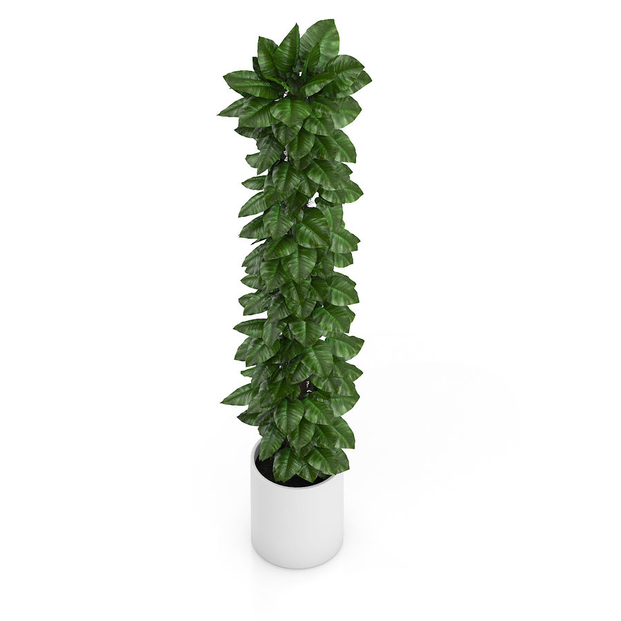 Hoge klimplant royalty-free 3d model - Preview no. 5
