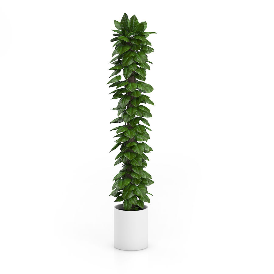Hoge klimplant royalty-free 3d model - Preview no. 3
