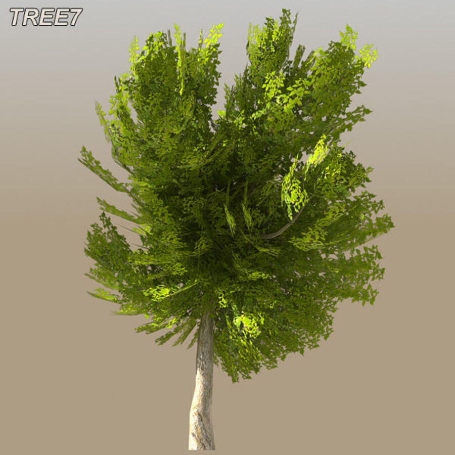 Tree Plant Pack royalty-free 3d model - Preview no. 98