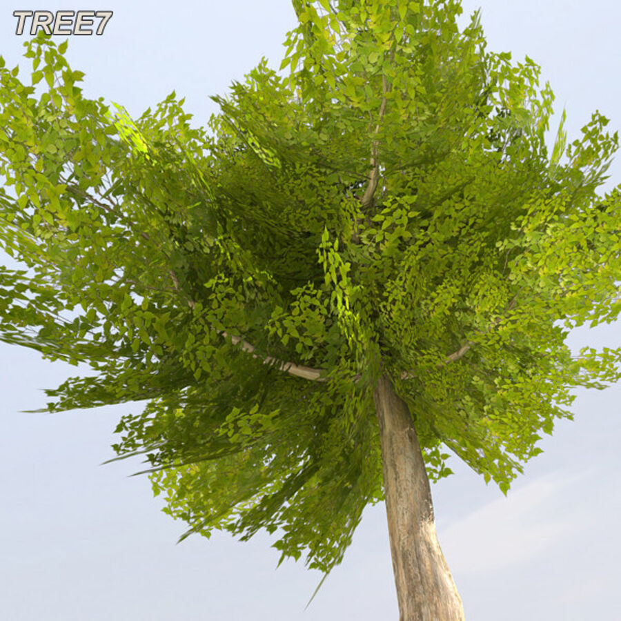 Tree Plant Pack royalty-free 3d model - Preview no. 97