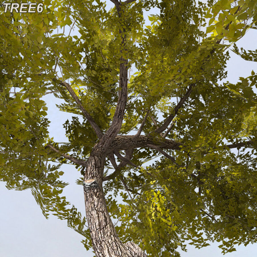 Tree Plant Pack royalty-free 3d model - Preview no. 82