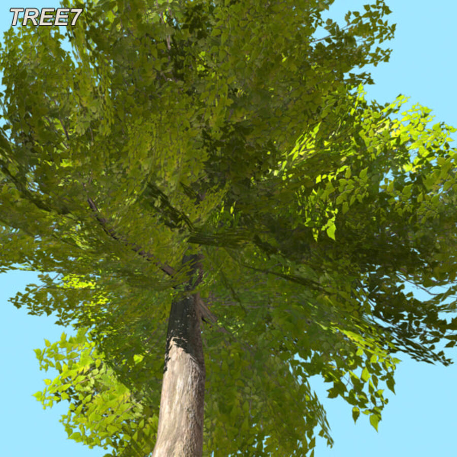 Tree Plant Pack royalty-free 3d model - Preview no. 99