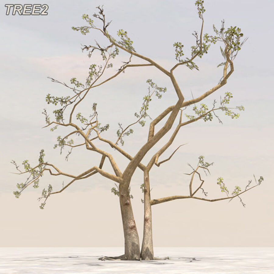 Tree Plant Pack royalty-free 3d model - Preview no. 21