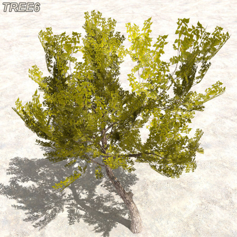 Tree Plant Pack royalty-free 3d model - Preview no. 80