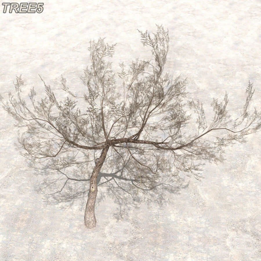 Tree Plant Pack royalty-free 3d model - Preview no. 66