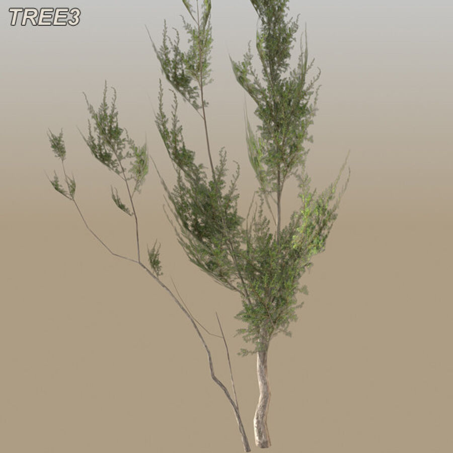 Tree Plant Pack royalty-free 3d model - Preview no. 45