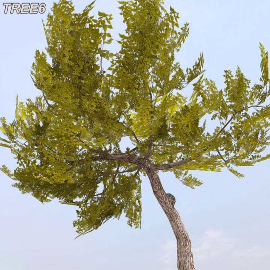 Tree Plant Pack royalty-free 3d model - Preview no. 81