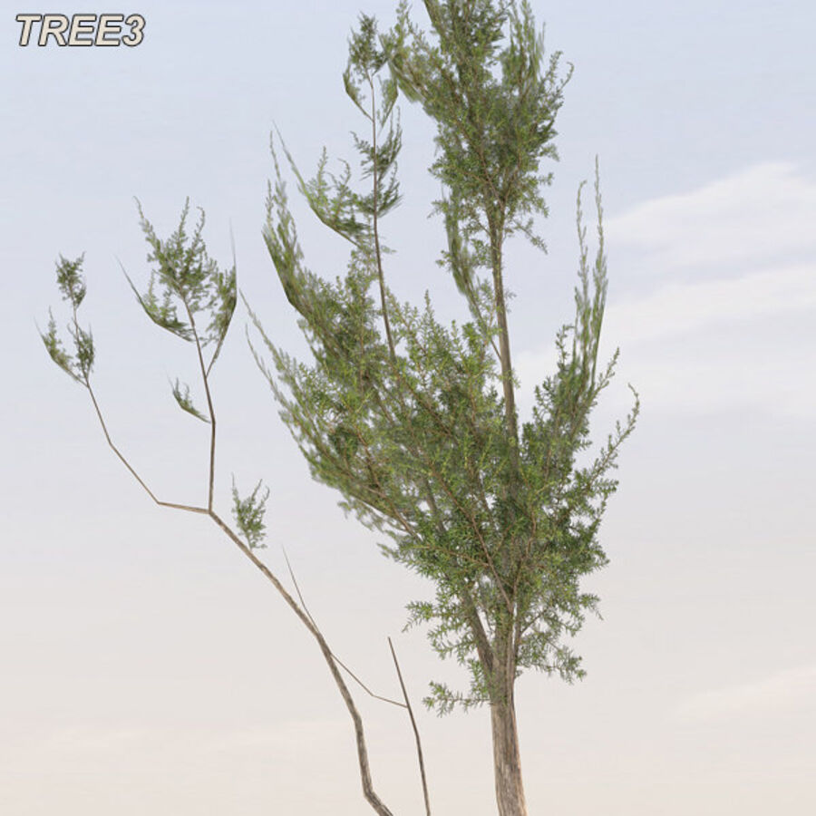 Tree Plant Pack royalty-free 3d model - Preview no. 43