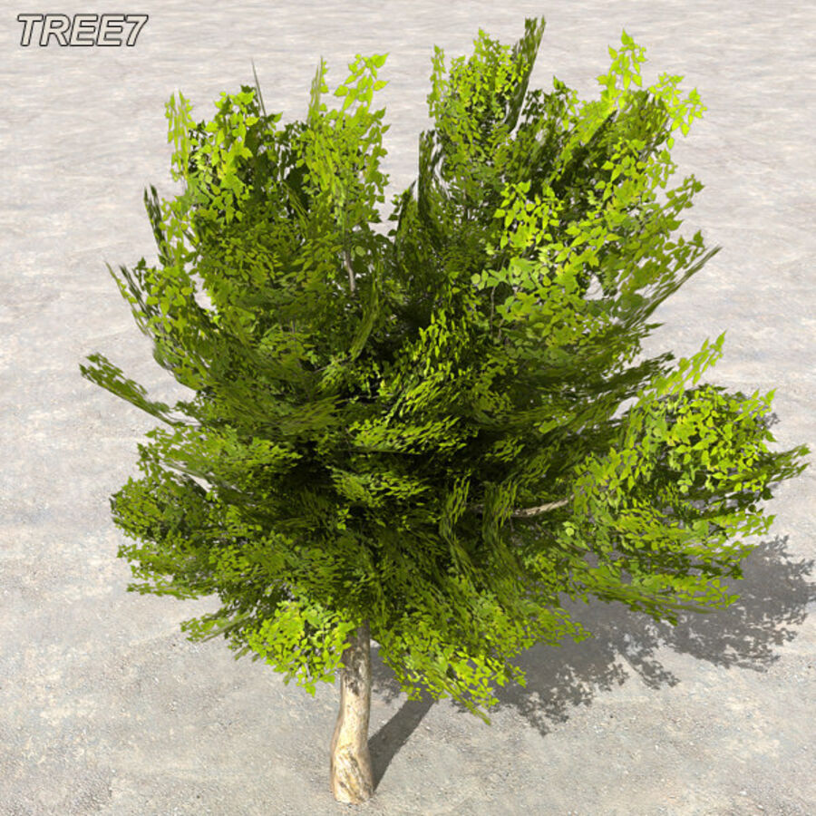 Tree Plant Pack royalty-free 3d model - Preview no. 92