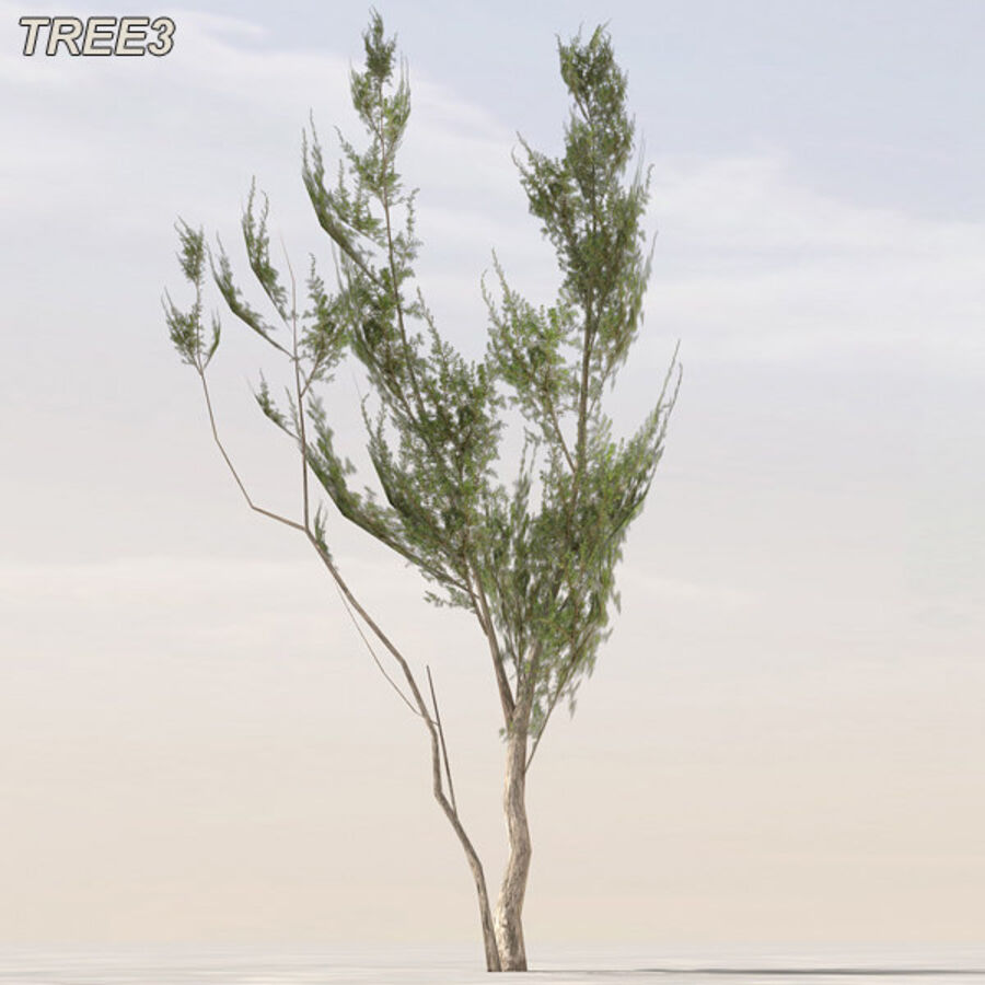 Tree Plant Pack royalty-free 3d model - Preview no. 40