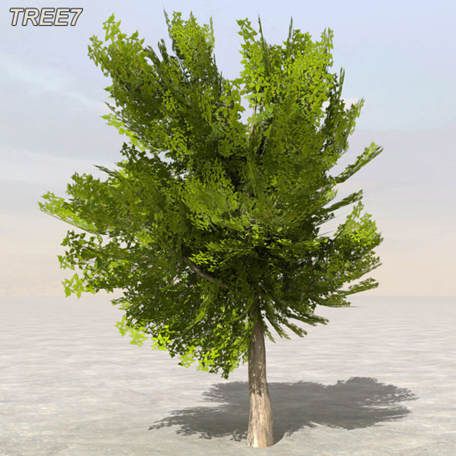 Tree Plant Pack royalty-free 3d model - Preview no. 91