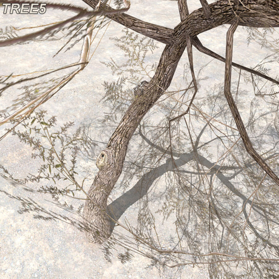 Tree Plant Pack royalty-free 3d model - Preview no. 67