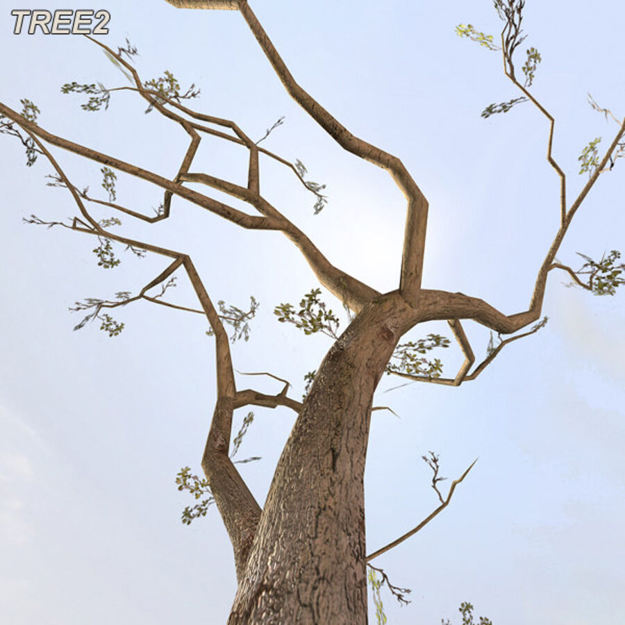 Tree Plant Pack royalty-free 3d model - Preview no. 25
