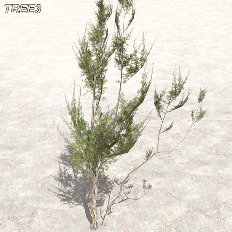 Tree Plant Pack royalty-free 3d model - Preview no. 38