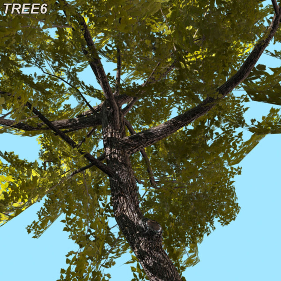 Tree Plant Pack royalty-free 3d model - Preview no. 88
