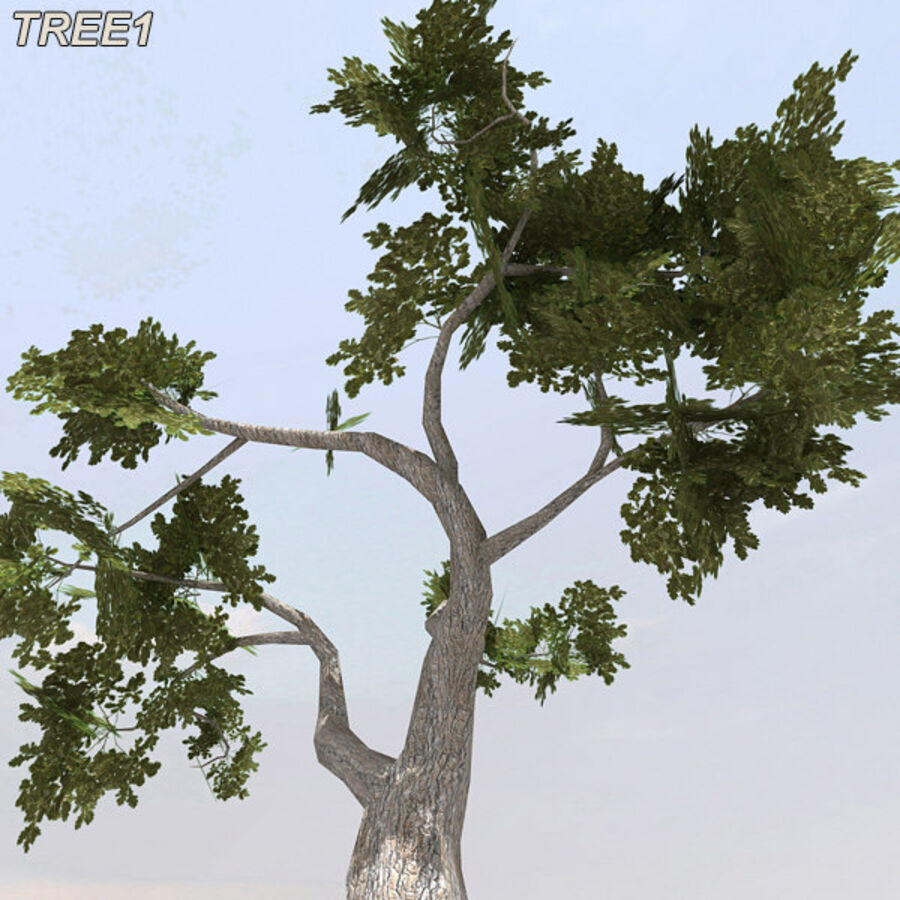 Tree Plant Pack royalty-free 3d model - Preview no. 14