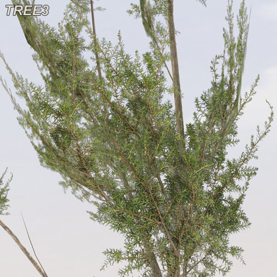 Tree Plant Pack royalty-free 3d model - Preview no. 42