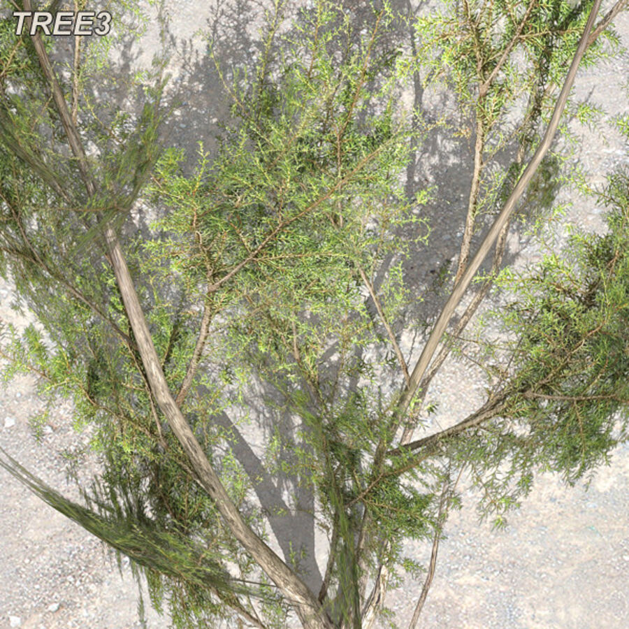 Tree Plant Pack royalty-free 3d model - Preview no. 41