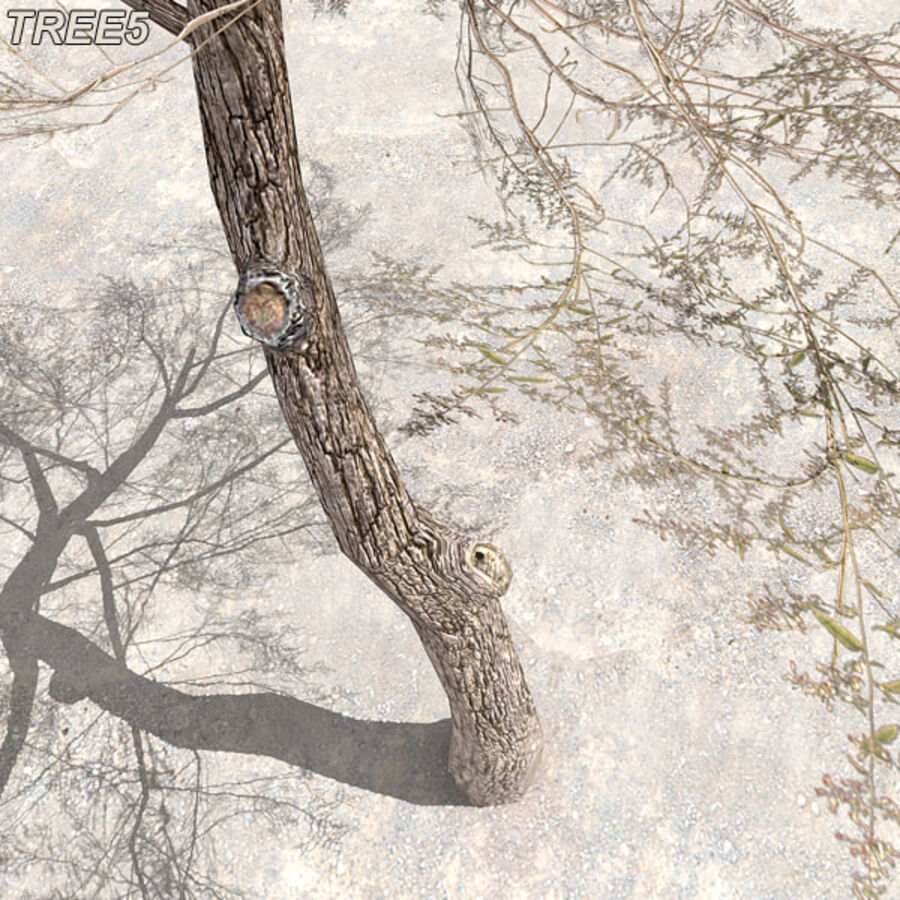 Tree Plant Pack royalty-free 3d model - Preview no. 68