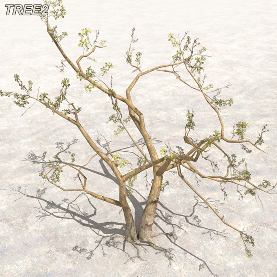 Tree Plant Pack royalty-free 3d model - Preview no. 18