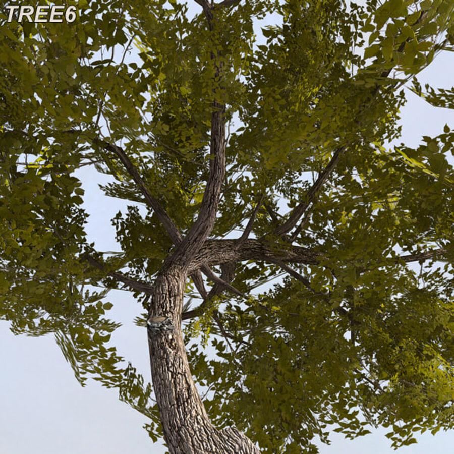 Tree Plant Pack royalty-free 3d model - Preview no. 83