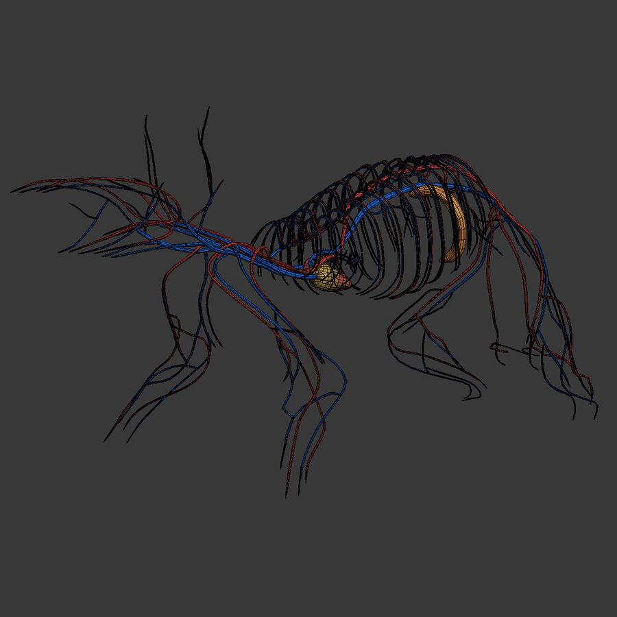 Текстурированная анатомия самцов и самок крыс royalty-free 3d model - Preview no. 25