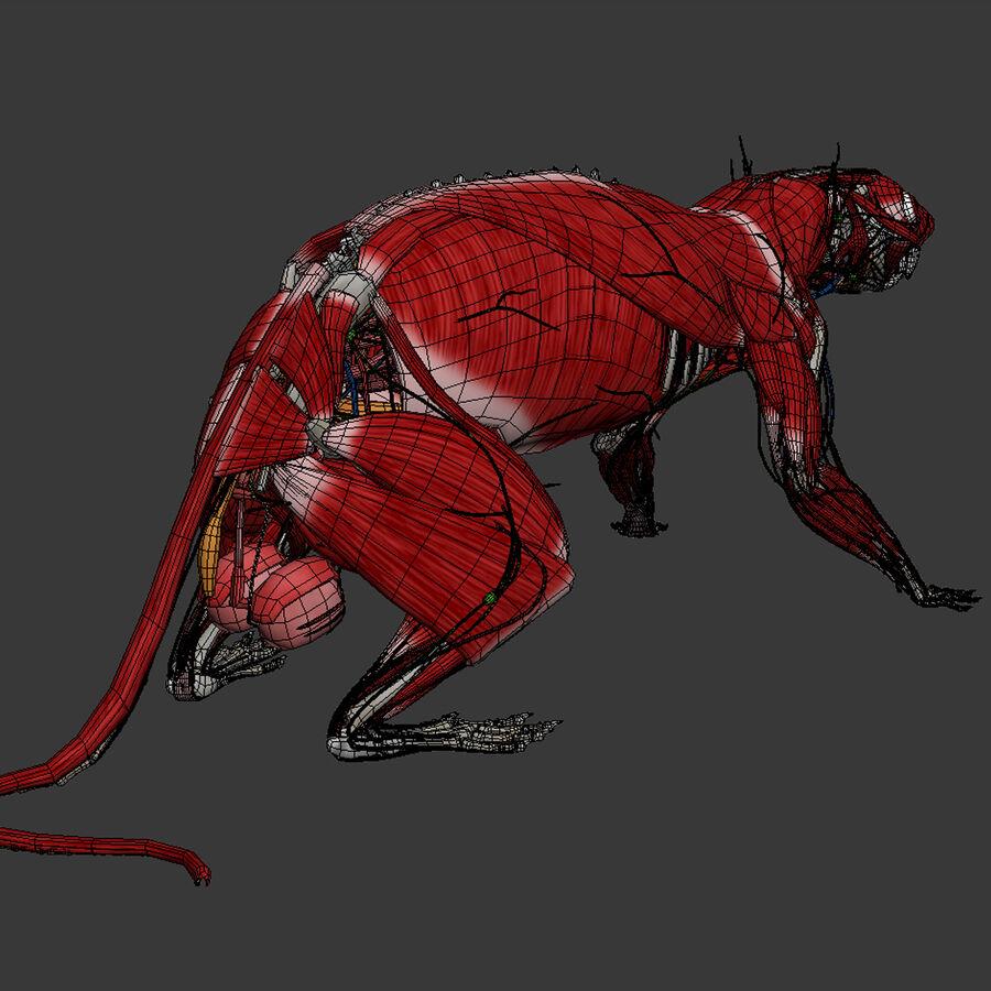 Текстурированная анатомия самцов и самок крыс royalty-free 3d model - Preview no. 23