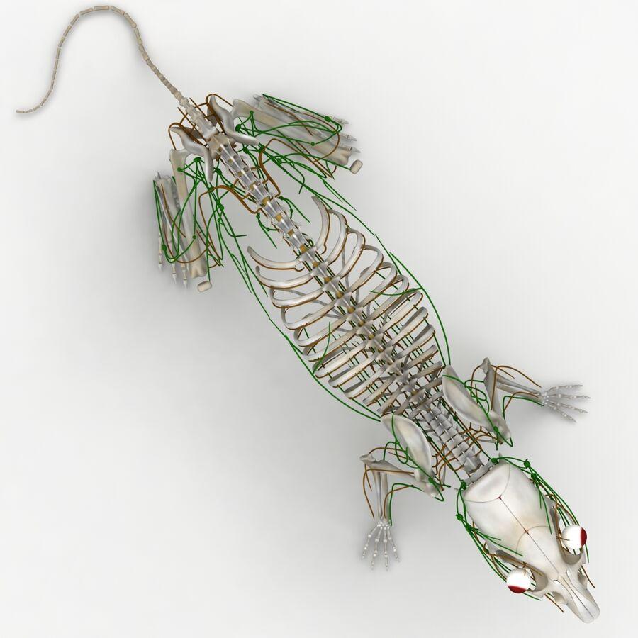 Текстурированная анатомия самцов и самок крыс royalty-free 3d model - Preview no. 19