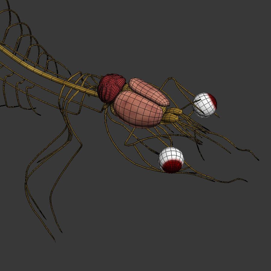 Текстурированная анатомия самцов и самок крыс royalty-free 3d model - Preview no. 31