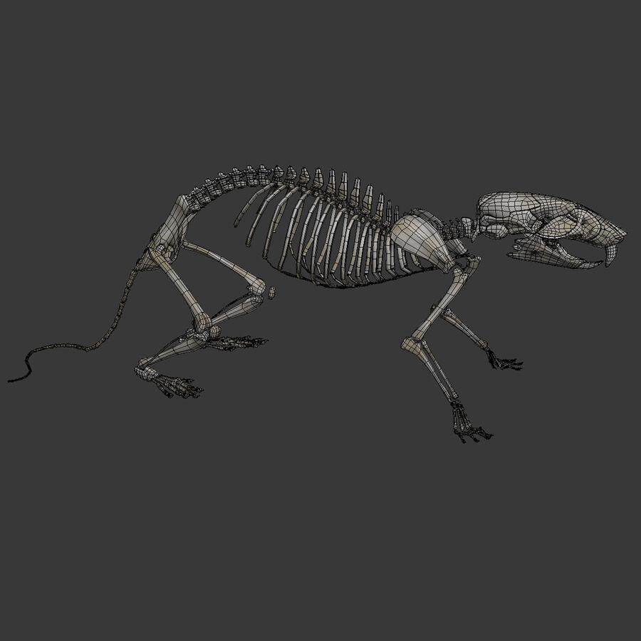 Текстурированная анатомия самцов и самок крыс royalty-free 3d model - Preview no. 33