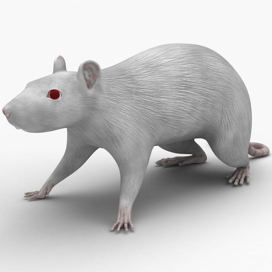 Текстурированная анатомия самцов и самок крыс royalty-free 3d model - Preview no. 2